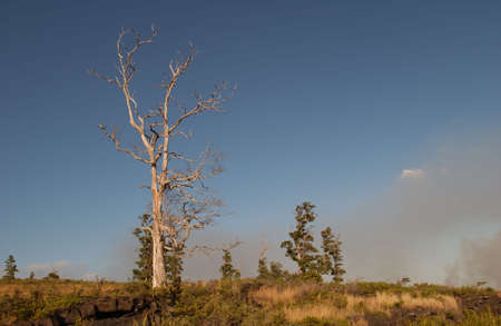 Vegetation - Volcano National Park - Big island, Hawaii Stock Photo - 182654