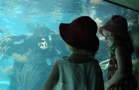 aquarium tank: Mexico - Mayan Riviera