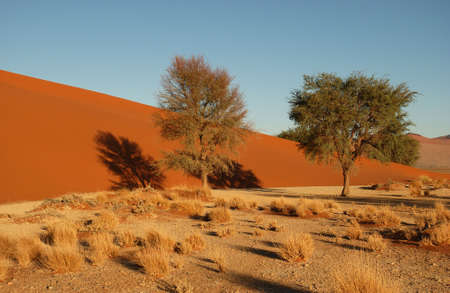 infertile: Sand Dunes of Sossusvlei - Namib desert, Namibia