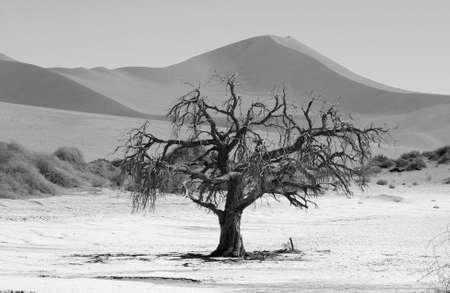 sandbank: Sand Dunes of Sossusvlei - Namib desert, Namibia