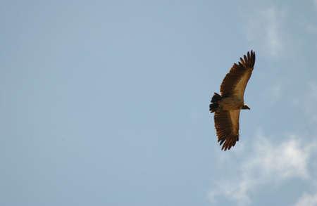 Birds - Africa photo