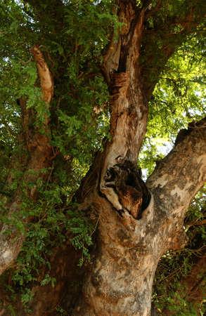 kruger national park: African Landscape - Kruger National Park