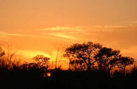rural skyline: African Landscape - Kruger National Park
