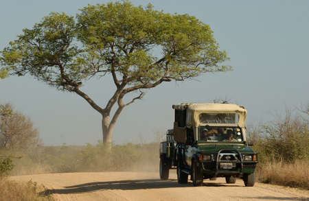 africa safari: Africa Safari - Kruger National Park - South Africa Stock Photo