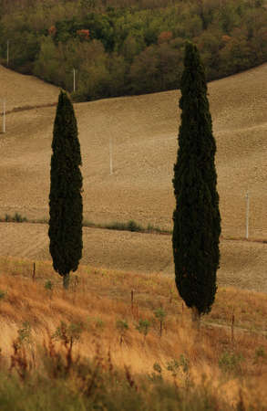 tuscana: Landscapes - Tuscany, Italy