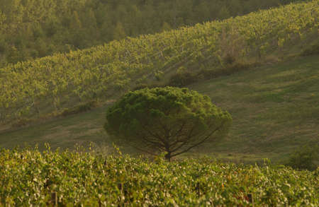 Landscapes - Tuscany, Italy Stock Photo - 184774