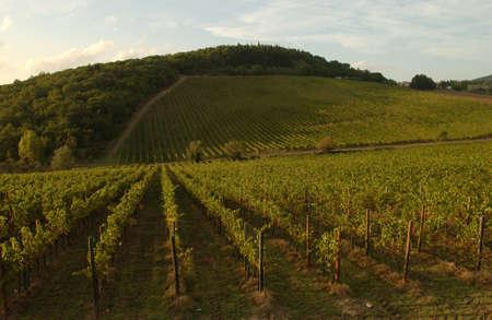 Vineyards - Tuscany, Italy Stock Photo - 184904