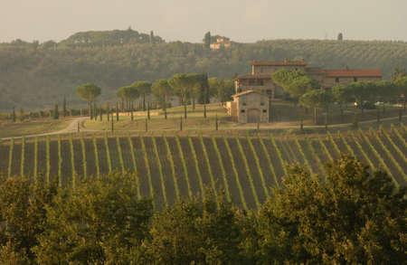 Vineyards - Tuscany, Italy photo