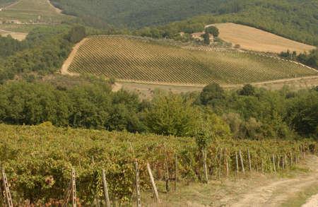 Vineyards - Tuscany, Italy Stock Photo - 184918
