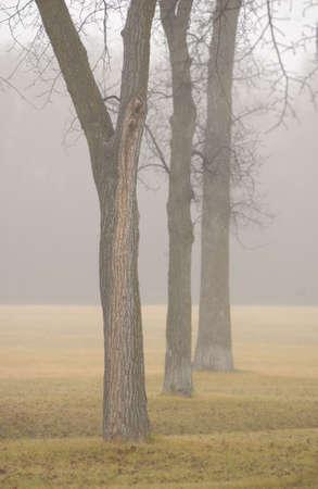 winnipeg: autumn fog in Assiniboine Park, Winnipeg, Manitoba