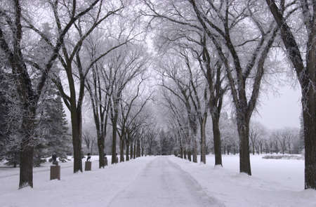 Winnipeg Manitoba, Canada Winter Scenes Stock Photo - 186114