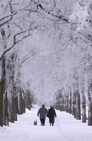 Winnipeg Manitoba, Canada Winter Scenes Stock Photo - 186123