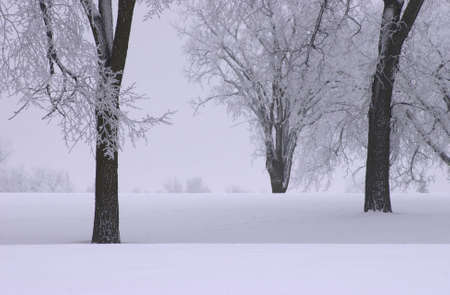 Winnipeg Manitoba, Canada Winter Scenes Stock Photo - 186146