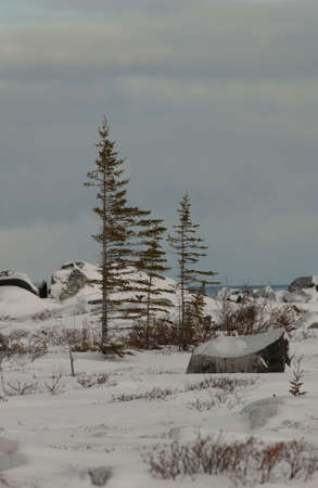 churchill: Churchill - Northern Manitoba town and surroundings, Canada Tundra