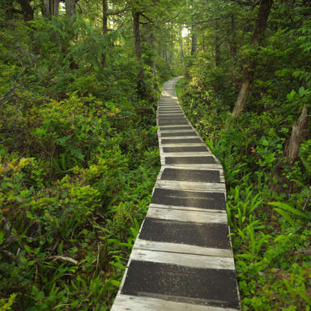 Hiking path in forest, Pacific Rim Park, Vancouver Island, Canada Stock Photo - 215829
