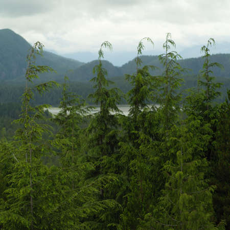 national scenic trail: Scenic view from Radar Hill Trail, Pacific Rim National Park, Vancouver Island, Canada