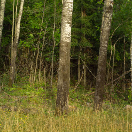 Trees at edge of forest Stock Photo - 254815