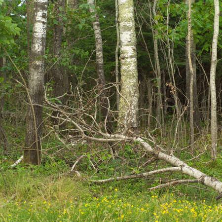 Fallen tree in forest Stock Photo - 254816