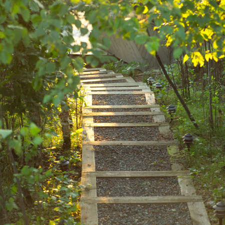 Stairway path in forest Stock Photo - 254821
