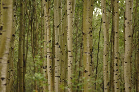 Trees in forest around Oil Sands Stock Photo - 254938