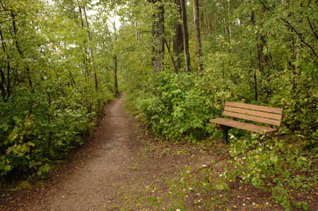 Path in forest around Oil Sands Stock Photo - 254939