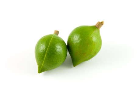 macadamia: Deux noix de macadamia non affin�s dans leurs boyaux sur un fond blanc