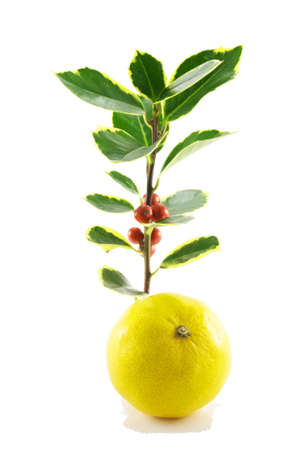 satsuma: Single sprig of green holly with red berries and a single satsuma on a white background