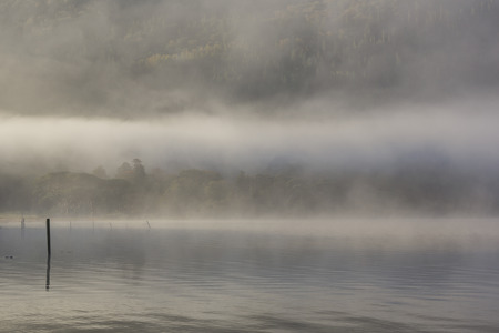 lakeshore: trees stand on a rocky lakeshore with a morning mist moving through the lake