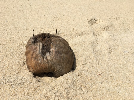 Damaged coconut burried in the sand on the beach
