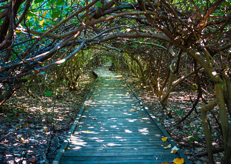 Path covered by branches and plants giving a natural tunnel get lost ambiance in Chaiao Tou Beach Park in Anping district Tainan Taiwan Stock Photo