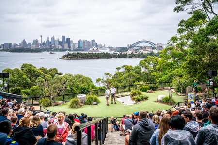 6th January 2019, Sydney NSW Australia : Bird show at Taronga zoo and scenic view of Sydney CBD skyline in background in NSW Australia 写真素材 - 119558132