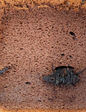 Chocolate Sponge cake macro vertical shot with texture
