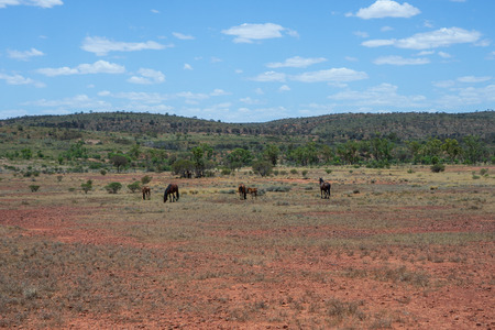 Summer Outback Australian landscape with brumby wild horses in northern territory Australia