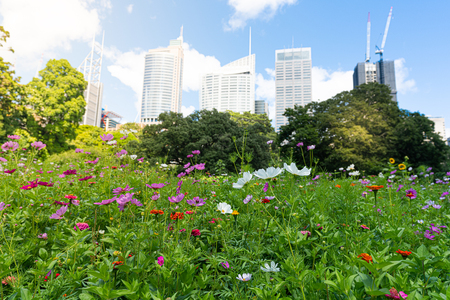 Wildflowers in Sydney Royal botanic garden in front of Sydney buildings skyline in NSW Australia 写真素材
