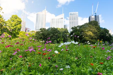 Wildflowers in Sydney Royal botanic garden in front of Sydney buildings skyline in NSW Australia 写真素材 - 123339781