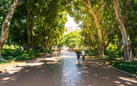 Alley and people in the shade of huge trees in south part of Hyde park in Sydney NSW Australia Stok Fotoğraf