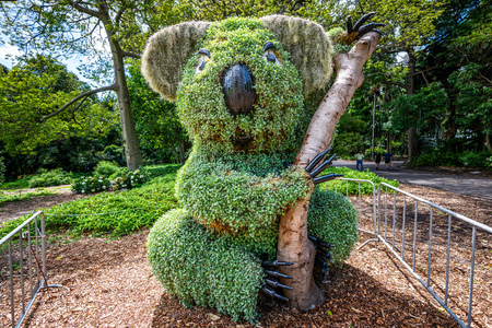 Koala shaped bush in Royal botanic garden in Sydney NSW Australia Standard-Bild