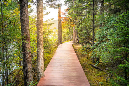 Boardwalk in middle of a forest with autumn colors and dramatic light in Potatso national park in Yunnan China