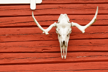 Animal Scull on the Wall