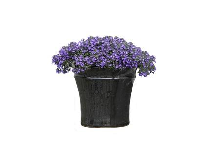 Flowers in Vase Stock Photo