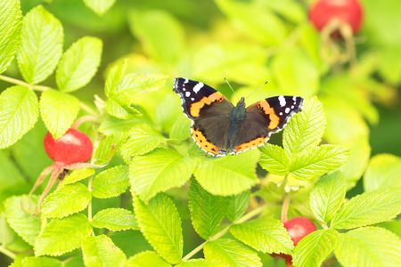 Beautiful buterfly, insect on green nature floral background.