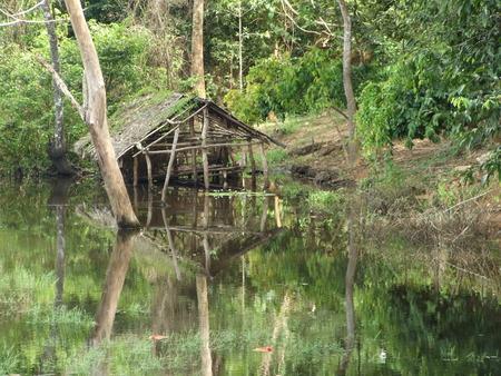 brushwood: alone cottage among brushwood Stock Photo