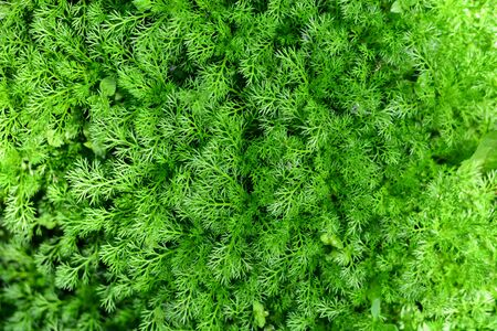 tasty fresh eco greens