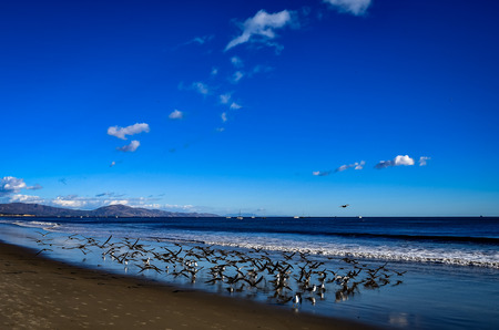 flock of birds Фото со стока