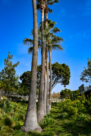 line of palms