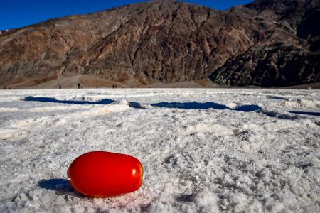 wild salt tomato Фото со стока