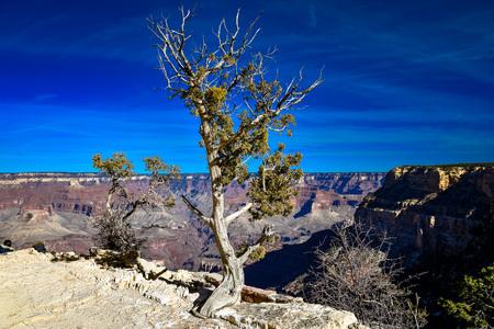 single tree by the edge