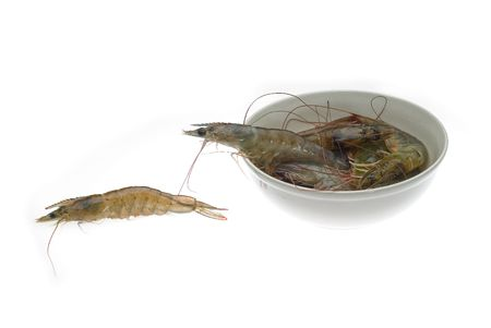 raw  alive shrimps on a bowl over white background photo