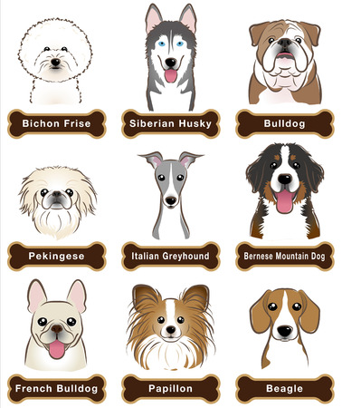 bernese: Dog  Nameplate
