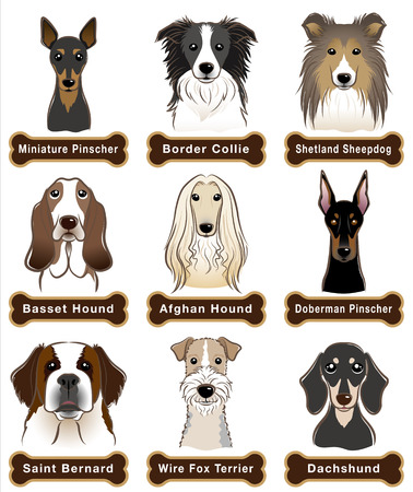 miniature collie: Dog  Nameplate